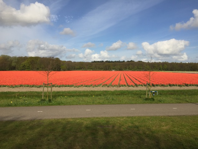 A view of tulip fields on the bus to Keukenhof.